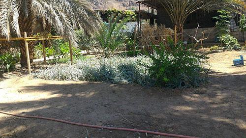 palmeraie-medine-jardin