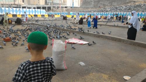 Sorties Arafat, Mina et grotte de Hira